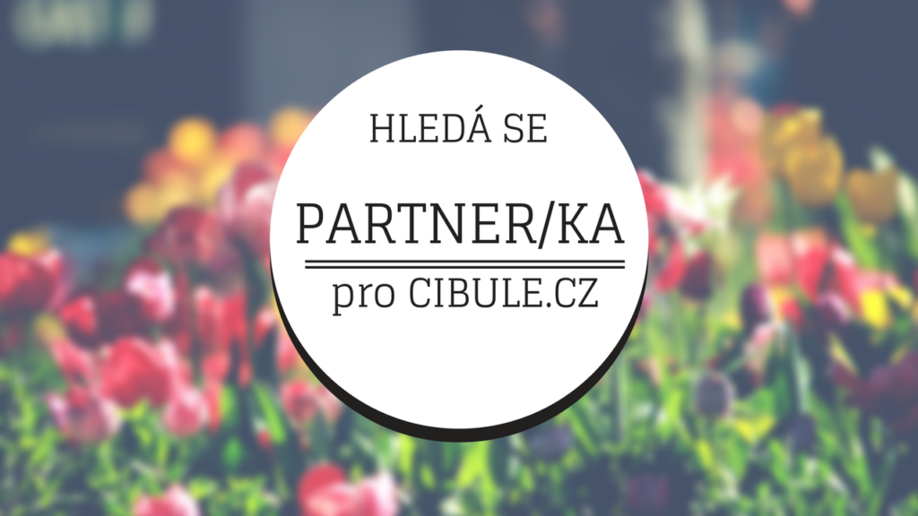 Hledá se partner/ka pro rozjezd Cibule