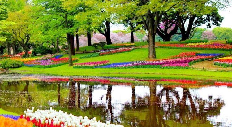 Keukenhof uvádí online prohlídku nejslavnější cibulové zahrady světa